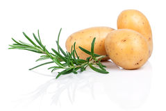 Raw potatoes with rosemary Royalty Free Stock Photography