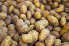 Raw Potatoes. Unpeeled raw potatoes for sale at the market Stock Photography