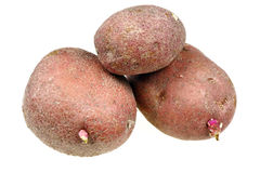 Raw potatoes. On a white background royalty free stock images