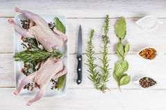 Raw poussin with herbs and spices Stock Photography