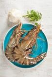Raw prawn. Fresh raw big prawn on a blue plate Royalty Free Stock Photos