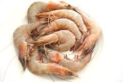 Raw prawn stock image
