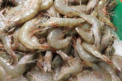 Raw prawn on market Royalty Free Stock Photography