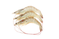 Raw Prawn Royalty Free Stock Photography