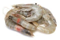 Raw prawns Royalty Free Stock Image