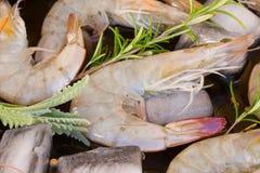 Raw prawns. Fresh green raw prawns with ice  and spicies Royalty Free Stock Photos