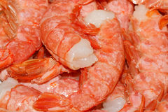 Raw prawns Stock Photography