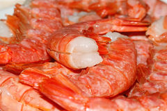 Raw prawns Stock Image