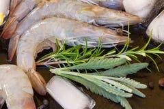 Raw prawns. Fresh  raw prawns with herbs  and  ice Royalty Free Stock Image