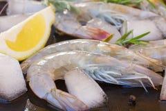 Raw prawns. Fresh  raw prawns with ice  and spicies Stock Images