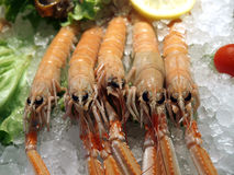 Raw prawns in ice. Seafood market- raw prawns in ice Stock Images