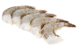 Raw prawns isolated on white Royalty Free Stock Photo