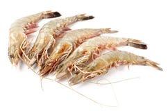 Raw prawns isolated on white background. Raw whole prawns isolated on white background Stock Photography