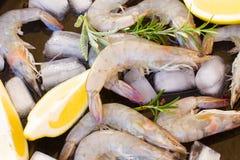 Raw prawns. Pile of fresh  raw prawns with ice  and spicies Stock Photos