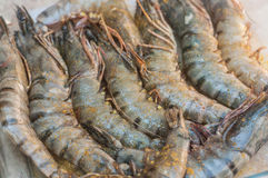 Raw prawns with spices in a plate Stock Images