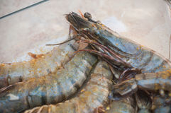 Raw prawns with spices in a plate Royalty Free Stock Photo