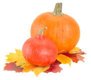 Raw pumpkins and fall leaves. Two raw  pumpkins and fall leaves  isolated on white background Royalty Free Stock Images