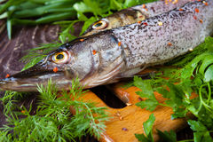 Raw purified pike on a board and sheaves of of green Stock Images