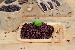 Raw purple rice berries and cooked of delicious for health. Royalty Free Stock Photo