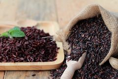 Raw purple rice berries and cooked of delicious for health. Royalty Free Stock Image