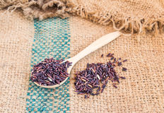 Raw purple rice berry in wooden spoon on burlap sack background Royalty Free Stock Image