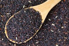 Raw purple Riceberry rice Royalty Free Stock Images