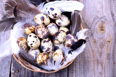 Raw quail eggs in a basket. Top view Royalty Free Stock Images