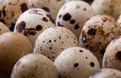 Raw quail eggs closeup in plastic packaging. The raw quail eggs closeup in plastic packaging Royalty Free Stock Images