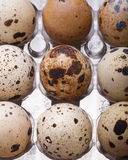 Raw quail eggs closeup in plastic packaging Royalty Free Stock Photo