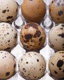 Raw quail eggs closeup in plastic packaging. The raw quail eggs closeup in plastic packaging Royalty Free Stock Photo