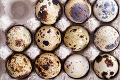 Raw quail eggs in egg holder Royalty Free Stock Photography