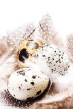 Raw quail eggs with feathers isolated on white background close Stock Photos