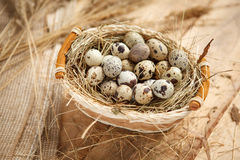Raw quail eggs Royalty Free Stock Image