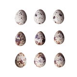 Raw quail eggs isolated on white background Royalty Free Stock Photo