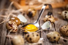 Fresh quail egg. Raw quail eggs in spoon on a rustic wooden table Royalty Free Stock Images