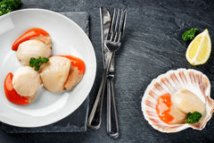 Raw queen scallops in sea food dinner concept. Food background. With copy space Stock Photos