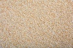 Raw quinoa full background Stock Photography