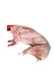 Raw rabbit Stock Image