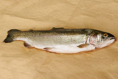 Raw rainbow trout Stock Photography