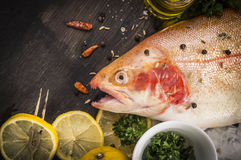 Raw rainbow trout fish preparation. Close up Royalty Free Stock Photo