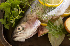 Raw Rainbow Trout Stock Images