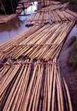 Raw Rattan. Rattan materials in the process of transportation by river Royalty Free Stock Photos