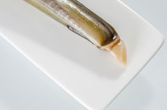 Raw razor-shell on a white dish. Royalty Free Stock Images