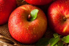 Raw Red Fuji Apples Royalty Free Stock Images