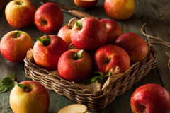 Raw Red Fuji Apples stock image