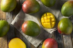 Raw Red Green Organic Mango Fruit. Ready to Eat Royalty Free Stock Image