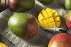 Raw Red Green Organic Mango Fruit. Ready to Eat Royalty Free Stock Images
