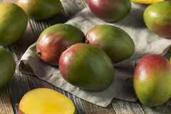 Raw Red Green Organic Mango Fruit. Ready to Eat Royalty Free Stock Photo