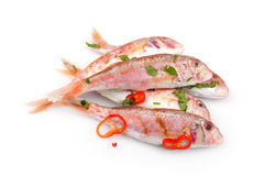 Raw Red Mullet Fish. Seasoned with chopped parsley and red pepper, isolated on white background Stock Images