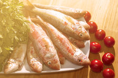 Raw red mullet Stock Photography